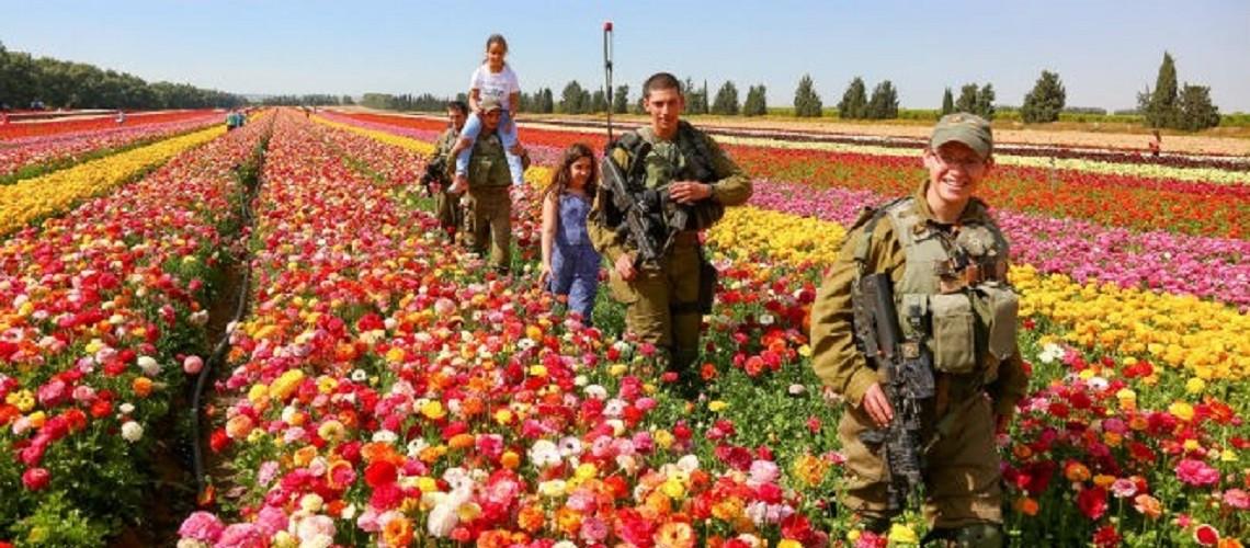 israel desert blooms