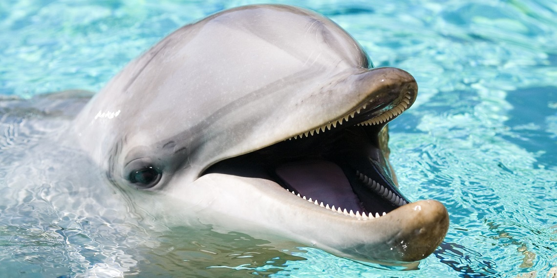 "Hamas captures ""Israeli spy dolphin""- the latest zoological conspiracy theory against Israel"