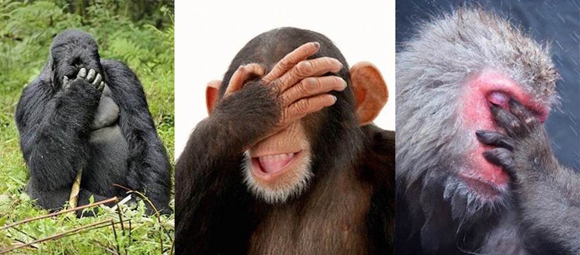 """Turkish journalist claims gorillas and chimps are """"mutated Jews"""""""