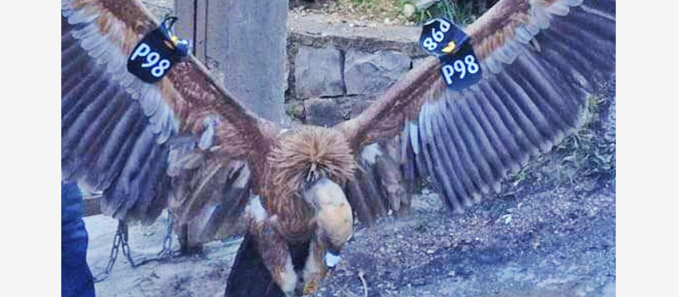 Israeli 'spy vulture' returned safely after being captured in Lebanon