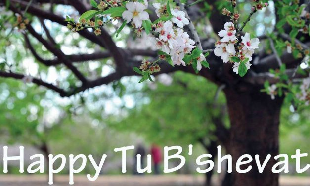 Tu B'Shevat – A Jewish holiday reminding us that everything happens in God's timing