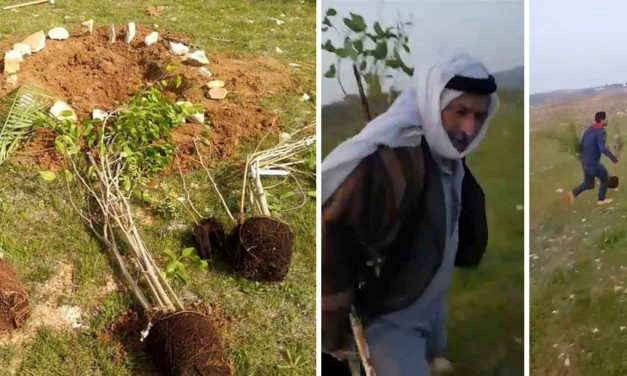 Palestinians uproot memorial trees to Jewish teen murdered by terrorist