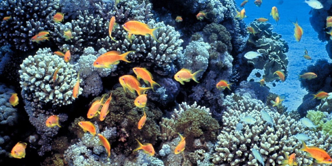 Israel and Arab neighbours join to protect Red Sea coral reefs