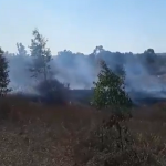 Over 20 arson balloons from Gaza destroy fields in southern Israel