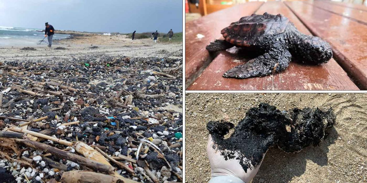Israel suffers ecological disaster after offshore oil spill