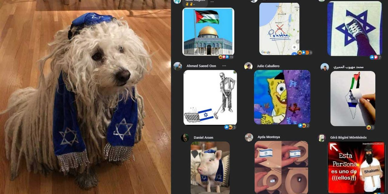 Zuckerberg receives anti-Semitic abuse online after posting picture of his dog wearing kippah and tallit